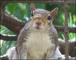 squirrel removal Westchester